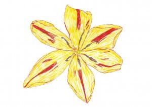TulipYellow