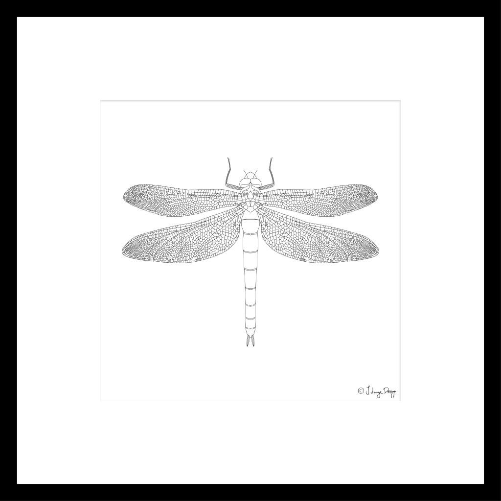 dragonfly_framed